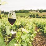 Think About the 5 Main Aspects of a Winery Business